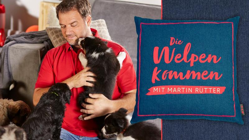 Martin Rütter Hundeschulen