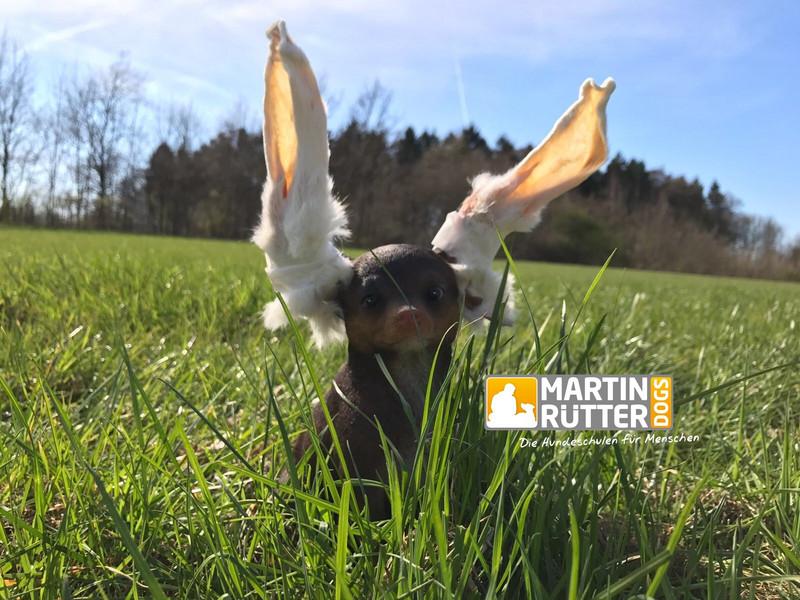 Martin Rütter Kosten