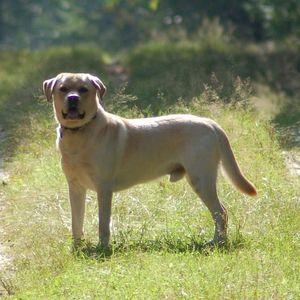 Rassekunde Martin Rutter Dogs Schwerin