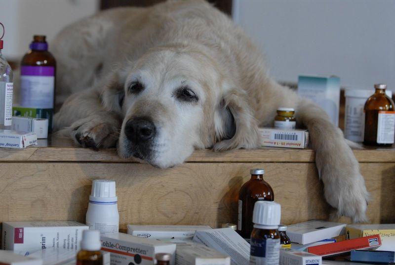 Angst An Silvester Martin Rutter Dogs