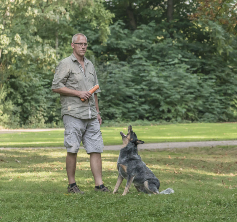 Dogs Tipp Oktober Problemverhalten Ubermassiges Bellen Martin Rutter Dogs