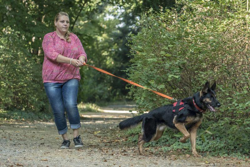 Deutscher Schaferhund Martin Rutter Dogs