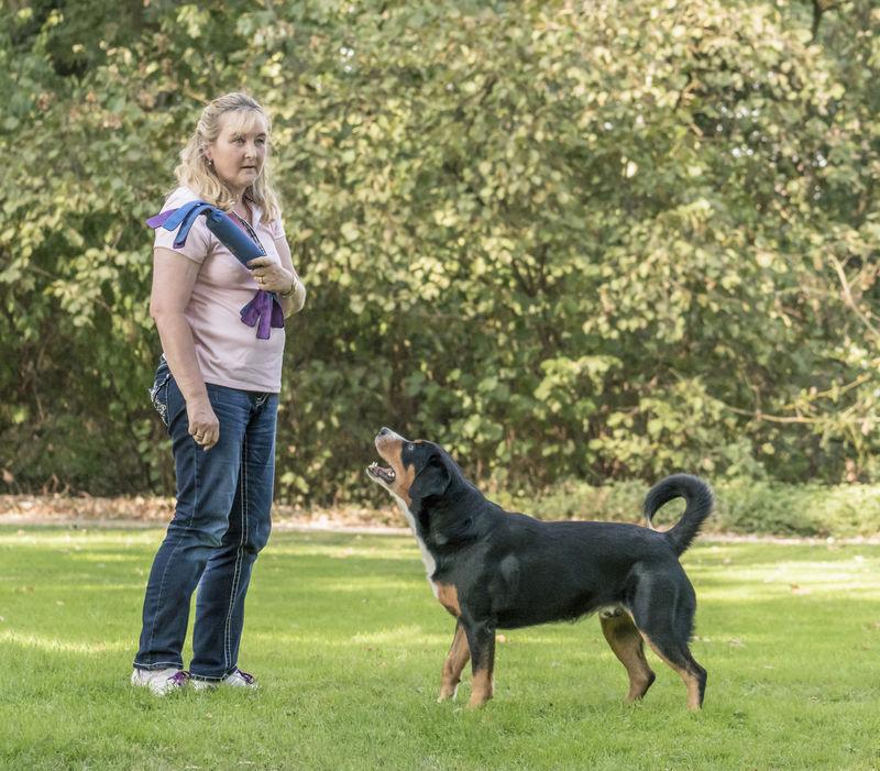 Appenzeller Sennenhund Martin Rutter Dogs