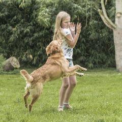 Angst Vor Hunden Einzeltraining Martin Rutter Dogs Trier Wittlich