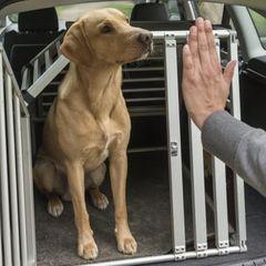 hund speichelt und erbricht beim autofahren