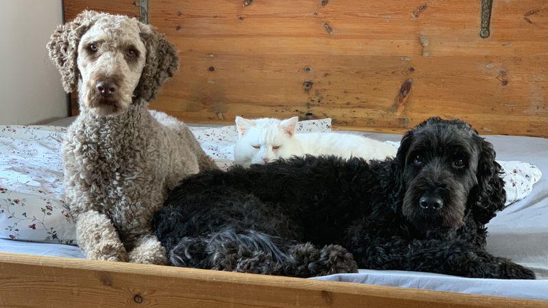 Darf Mein Hund Mit Mir Im Bett Schlafen Martin Rütter Dogs Schwerin
