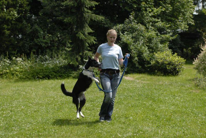 Hund Bellt Andere Hunde An Martin Rütter