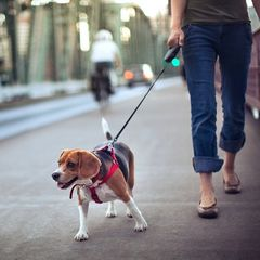 Hund Zieht An Der Leine Martin Rütter