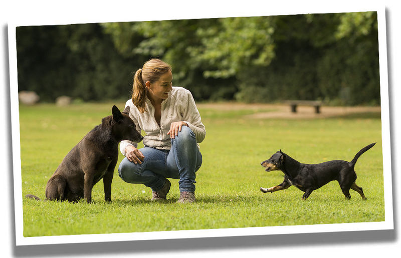Top 10 Hunde Irrtümer Martin Rütter Dogs Schwerin