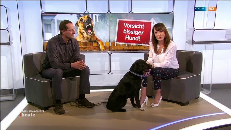 Angst Vor Hunden Uberwinden Martin Rutter Dogs Halle Naumburg