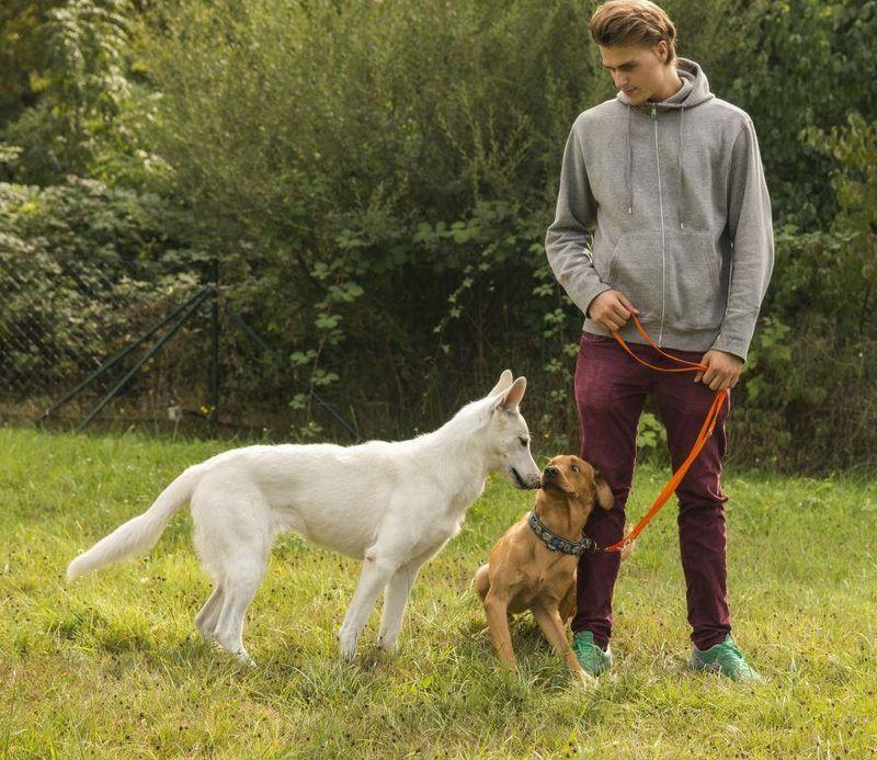 D Rfen Hunde Kontakt Zu Anderen Hunden An Der Leine Haben Martin R Tter Dogs Schwerin