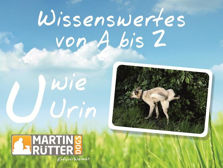 Wissenswertes Von A Bis Z U Wie Urin Martin Rütter Dogs